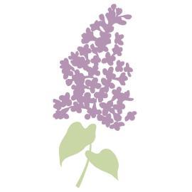 Wild Lilac